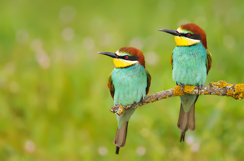 Image result for birds of hungary