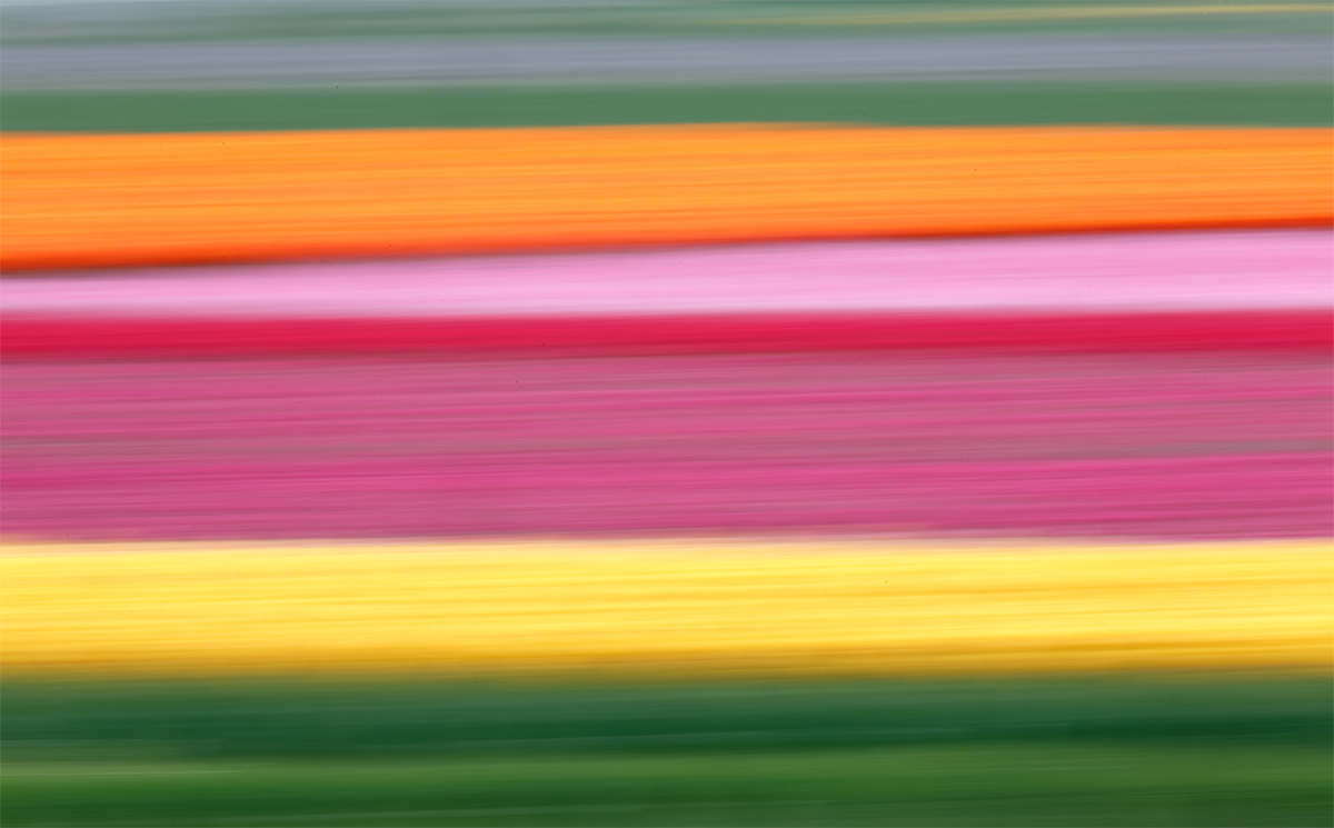 flower-book-tulip-field-blur