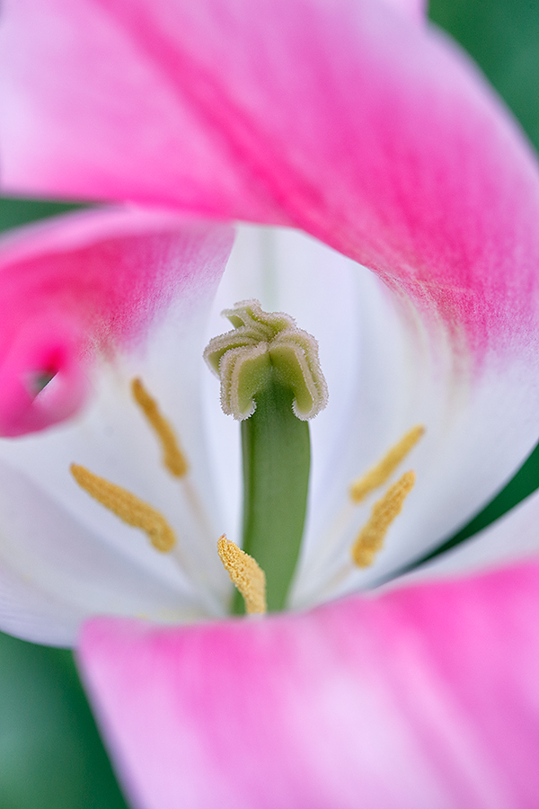 tulip-center-b-_a1c9057-keukenhof-gardens-lisse-holland