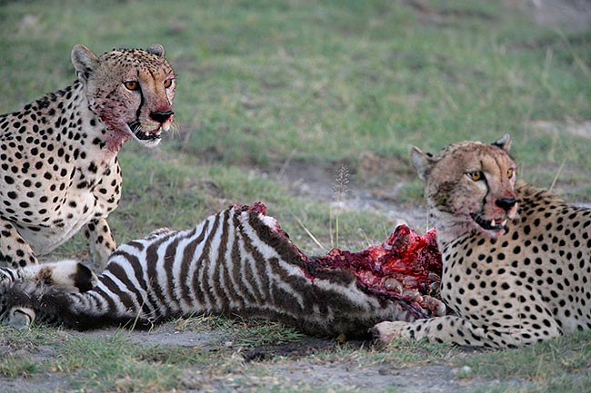 How Animals Eat Their Food Guys
